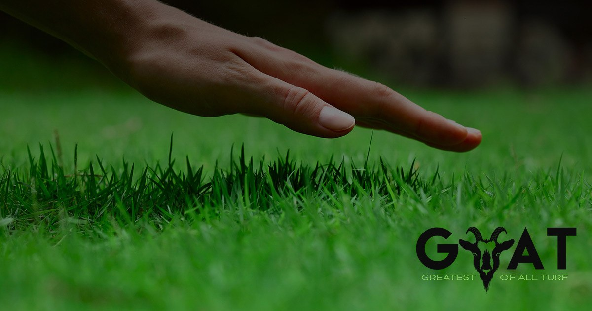 Request Free Samples From Greatest of All Turf